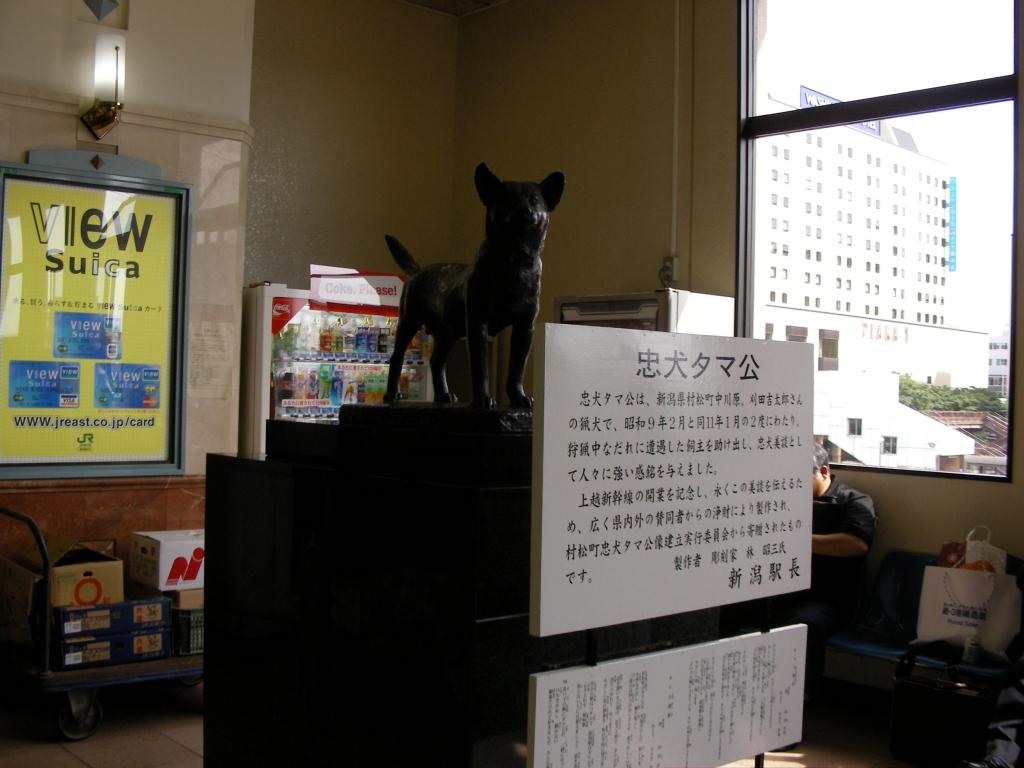 忠犬タマ公