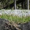 三仏堂の花