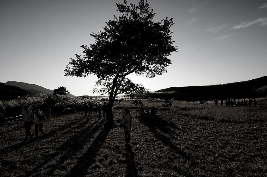 木の陰,人の影
