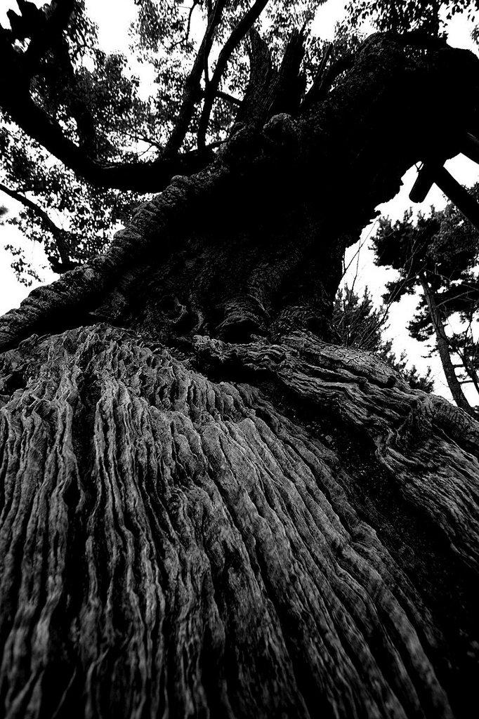 神のおわす木
