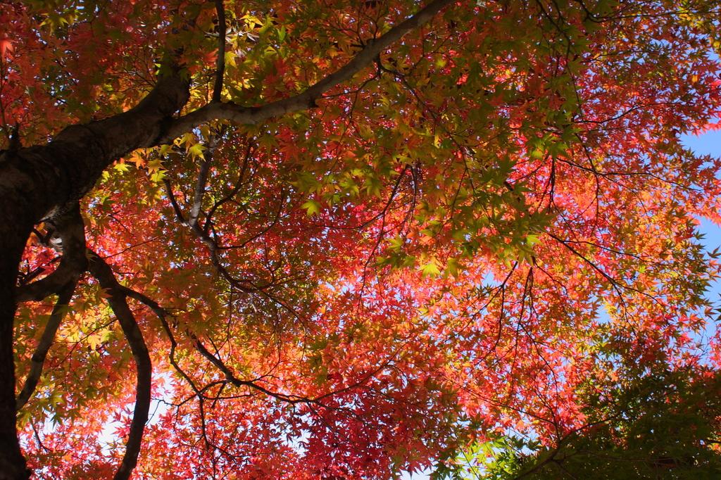 秋に包まれて
