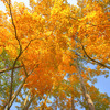 秋を見上げる