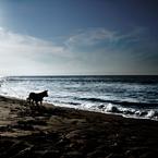 CANON Canon EOS 7Dで撮影した風景(Dog Sea & Blue)の写真(画像)