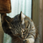 CANON Canon EOS 40Dで撮影した動物(猫チョップ♪)の写真(画像)