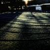 朝日 〜冬の散歩道〜