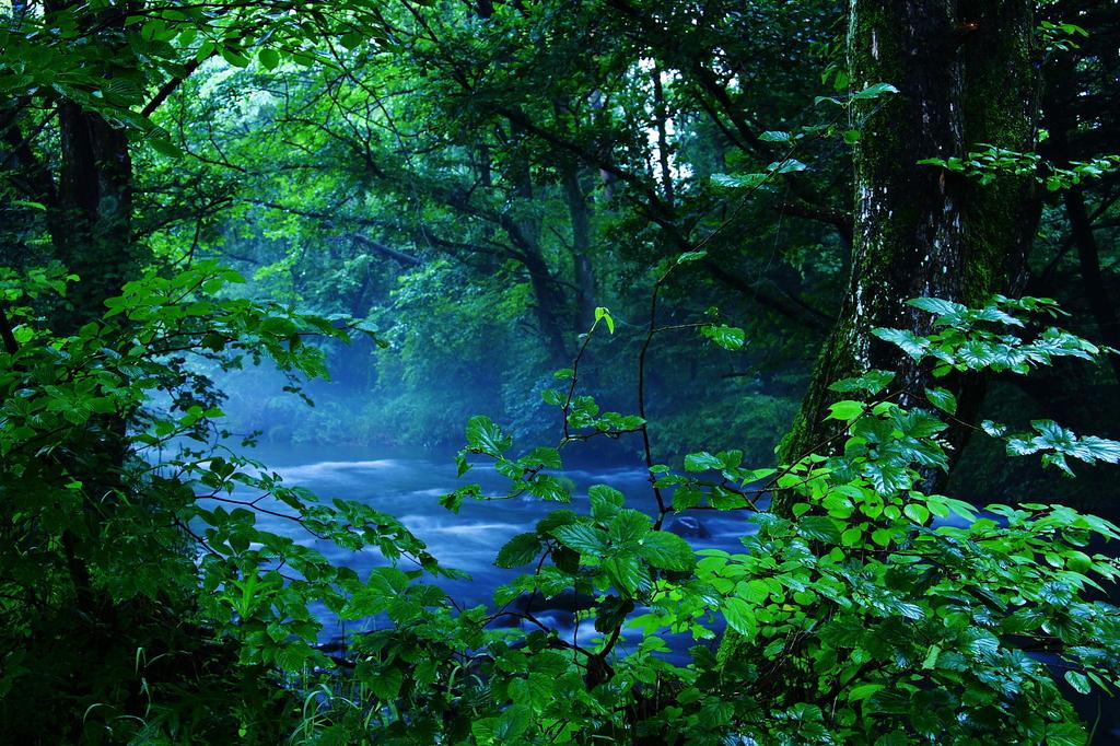 朝もやの渓流