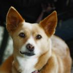 CANON Canon EOS 40Dで撮影した動物(ハイ、ち〜〜ず。。)の写真(画像)