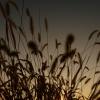 望郷の朝陽