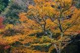 秋の終わりの・・・