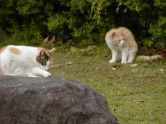 公園で見かけた猫