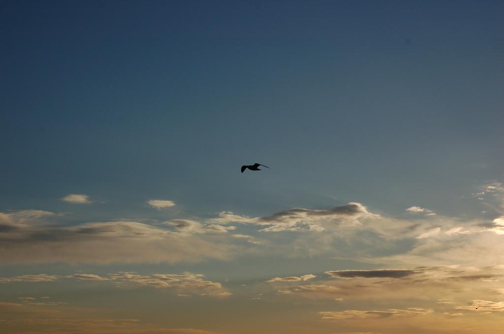 大空に羽ばたく