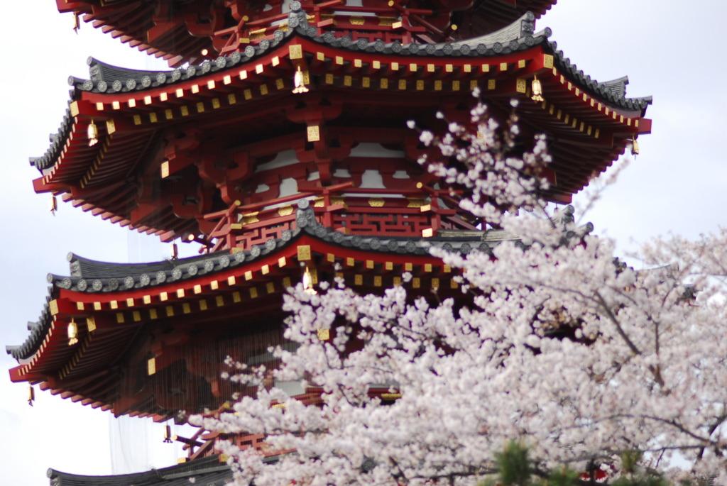 平成22年4月3日川崎大師の桜