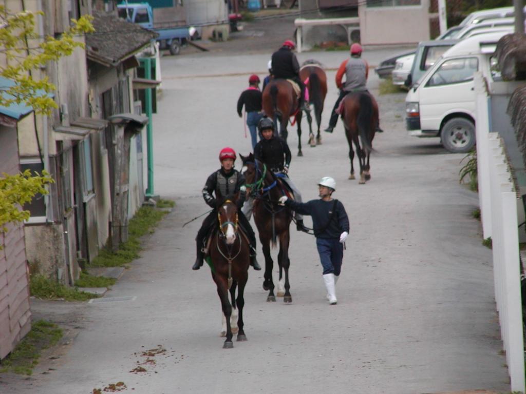 川崎競馬場練習馬場厩舎