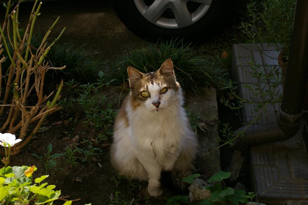 Cat Morgen