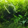 水草ワイルド