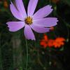 Flower Ⅰ