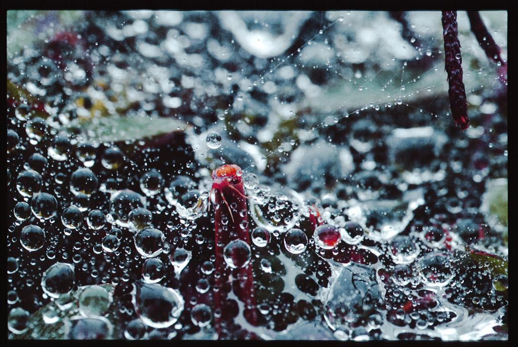 水玉の世界21
