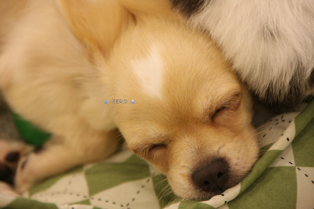 ゆっくり寝たいよぉ〜