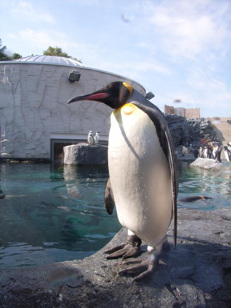 取締役ペンギン