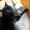 抱き合う姉妹