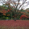 紅葉のじゅうたん