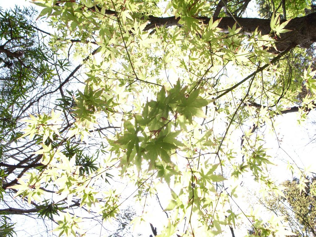 見上げる緑