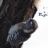 CANON Canon EOS Kiss Digital Nで撮影した動物(つつく!)の写真(画像)