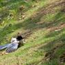 CANON Canon EOS Kiss Digital Nで撮影した動物(自然乾燥)の写真(画像)
