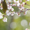 うららかな春