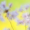 春~桜咲く~