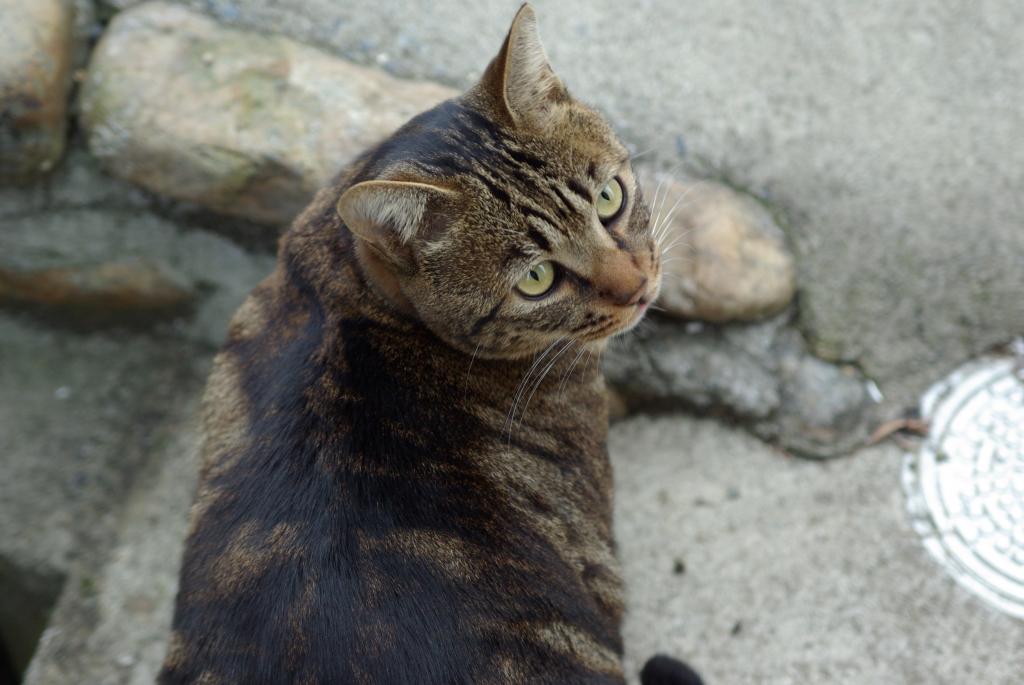 メタボ猫なのに「ちび」ちゃん
