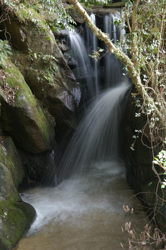 渓流の小さな滝