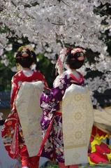 艶桜 其の壱