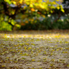落葉の賑わい