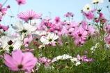 花畑を行く