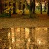 公園の秋2