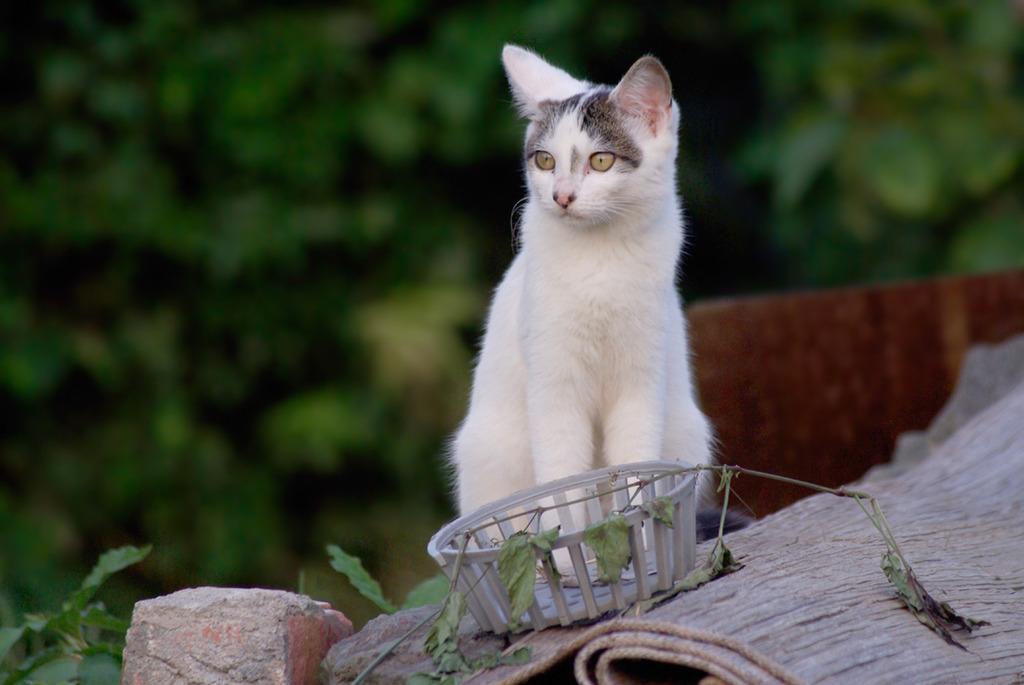「子猫」3