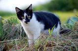 「子猫」2