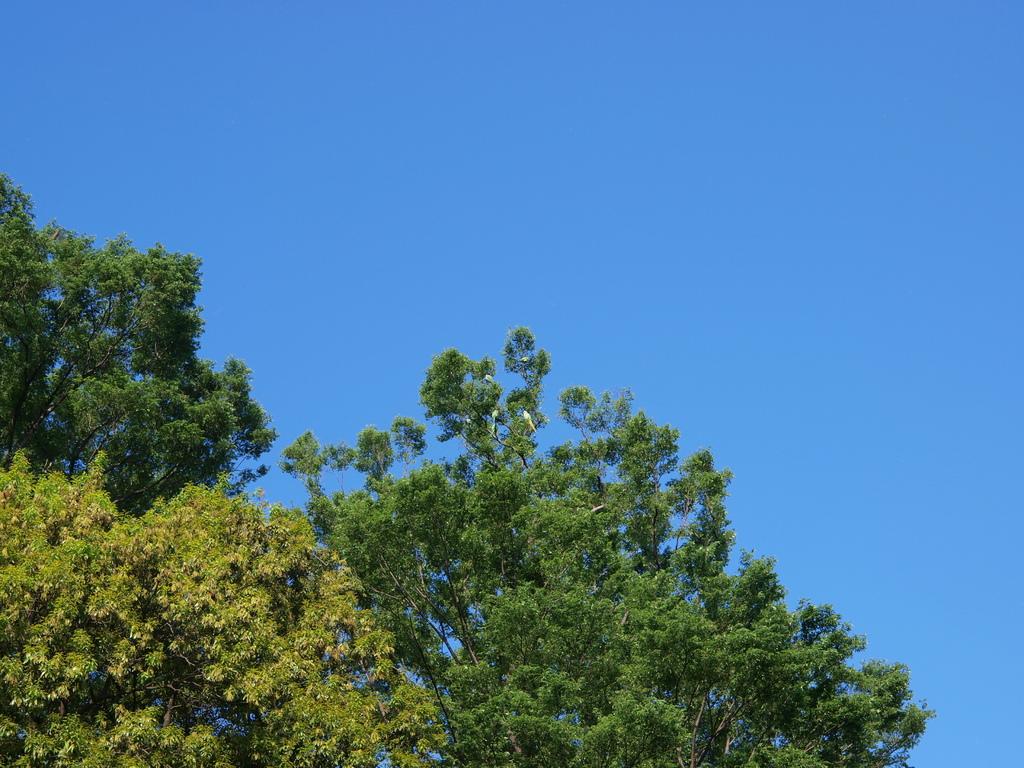天高く鳥の集う樹