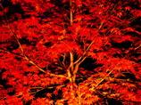 南房総・小松寺の紅葉