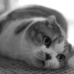 OLYMPUS E-510で撮影した動物(鈴)の写真(画像)