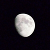 月のウサギ