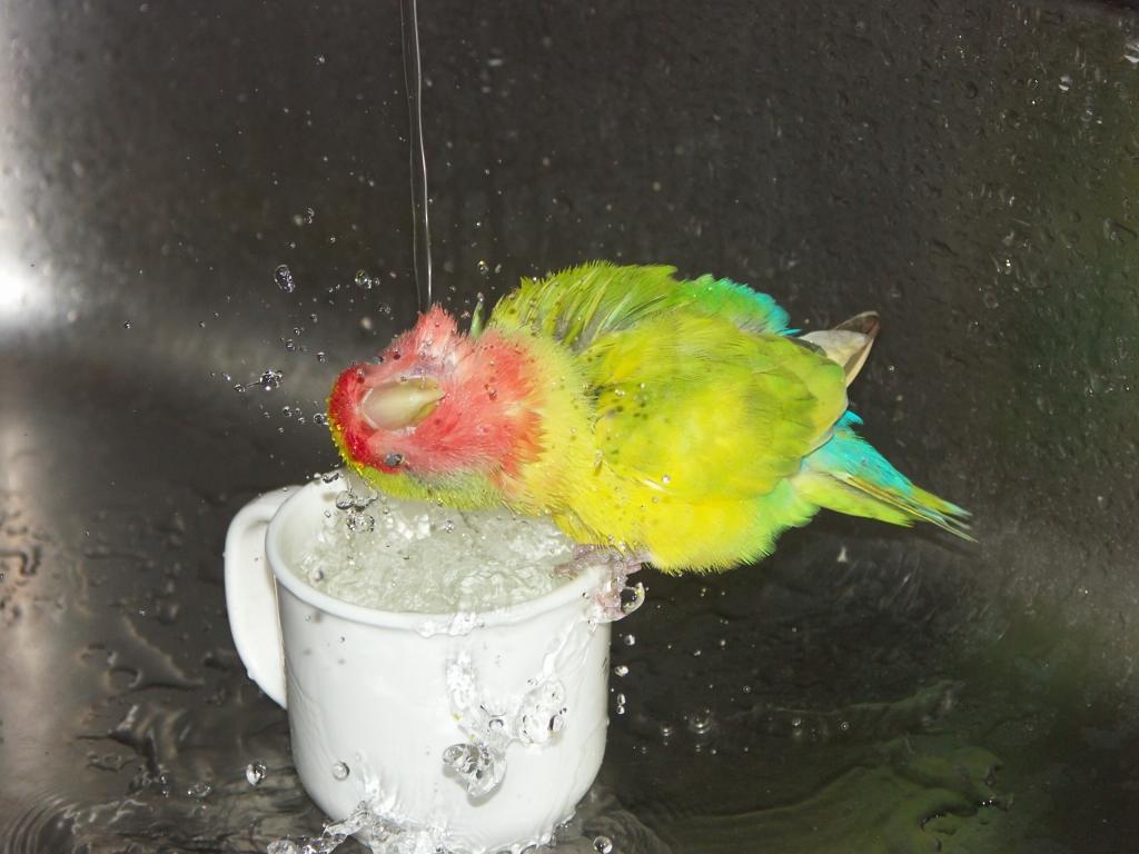 ひなちゃん 水浴び