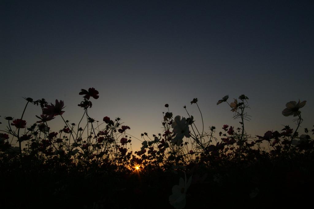 秋の花に咲く星