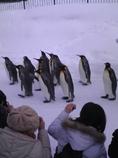 キングペンギンと撮影者たち