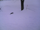 雪がふかふかw