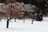 柿と雪とSLと