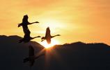 朝日を飛ぶ