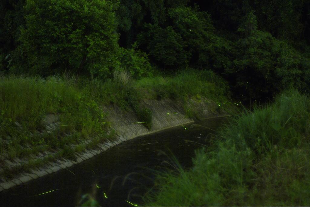 蛍 2008