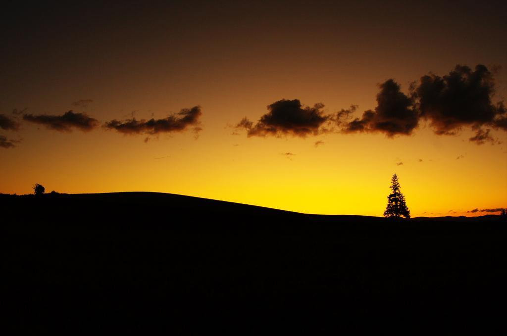 美瑛のクリスマスツリー